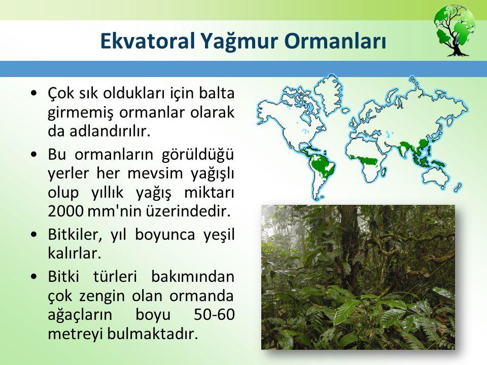 Ekvatoral Yağmur Ormanları Çok sık oldukları için balta girmemiş ormanlar olarak da adlandırılır. Bu ormanların görüldüğü yerler her mevsim yağışlı ol