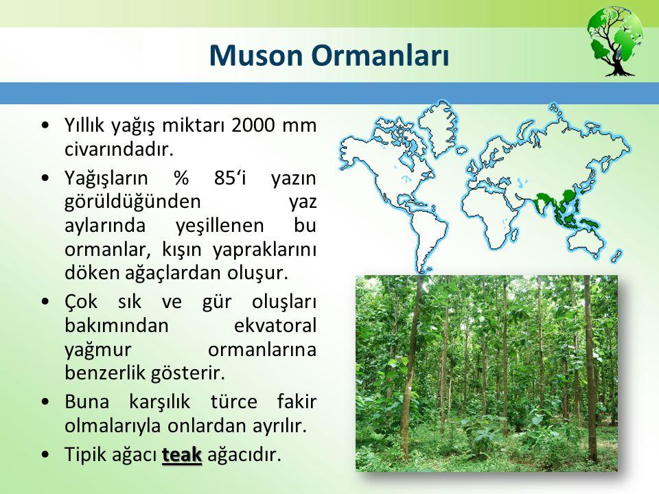 Muson Ormanları Yıllık yağış miktarı 2000 mm civarındadır. Yağışların % 85'i yazın görüldüğünden yaz aylarında yeşillenen bu ormanlar, kışın yapraklar