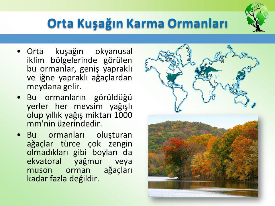 Orta Kuşağın Karma Ormanları Orta kuşağın okyanusal iklim bölgelerinde görülen bu ormanlar, geniş yapraklı ve iğne yapraklı ağaçlardan meydana gelir.