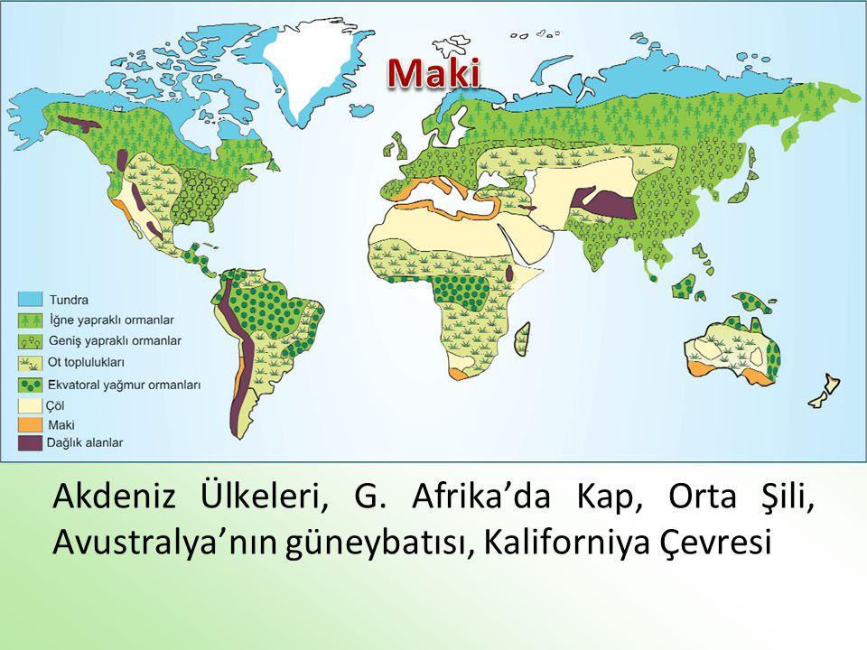 Akdeniz Ülkeleri, G. Afrika'da Kap, Orta Şili, Avustralya'nın güneybatısı, Kaliforniya Çevresi
