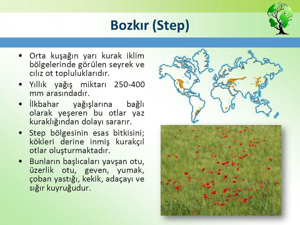 Bozkır (Step) Orta kuşağın yarı kurak iklim bölgelerinde görülen seyrek ve cılız ot topluluklarıdır. Yıllık yağış miktarı 250-400 mm arasındadır. İlkb