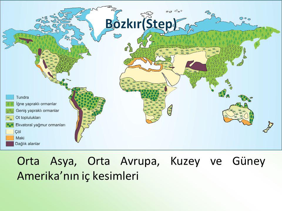 Orta Asya, Orta Avrupa, Kuzey ve Güney Amerika'nın iç kesimleri