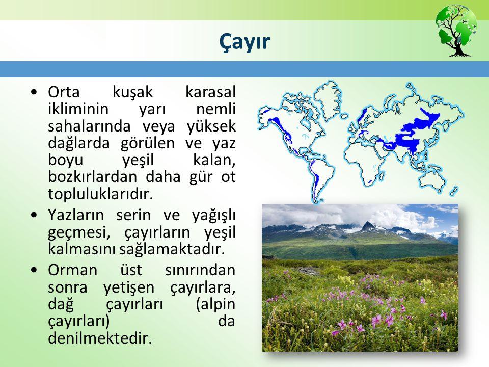 Çayır Orta kuşak karasal ikliminin yarı nemli sahalarında veya yüksek dağlarda görülen ve yaz boyu yeşil kalan, bozkırlardan daha gür ot topluluklarıd