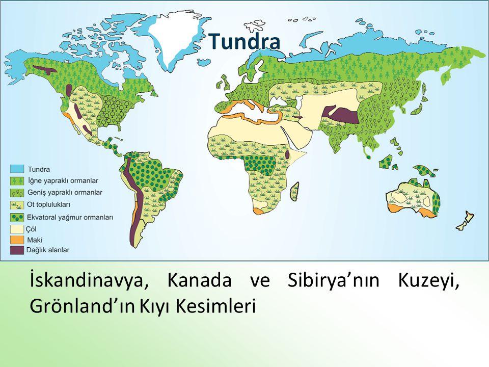 İskandinavya, Kanada ve Sibirya'nın Kuzeyi, Grönland'ın Kıyı Kesimleri