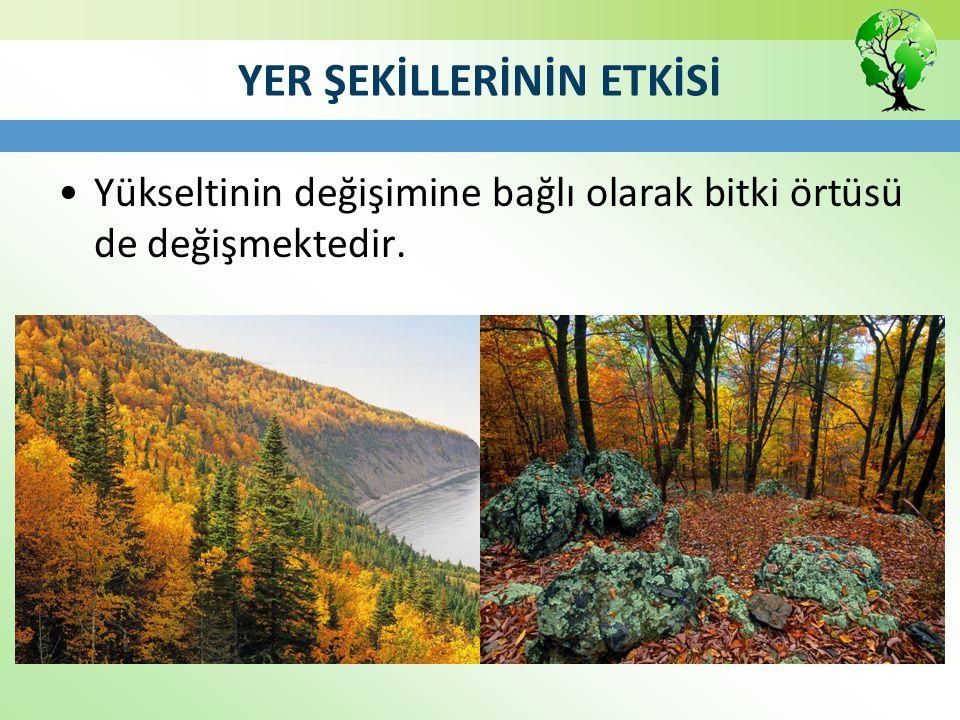 Maki Bodur ağaçlardan ve çalılardan (yabani zeytin, defne, kocayemiş, mersin, keçiboynuzu, zakkum, süpürge çalısı, kermes meşesi) oluşan makiler Akdeniz ikliminin bitki örtüsüdür.