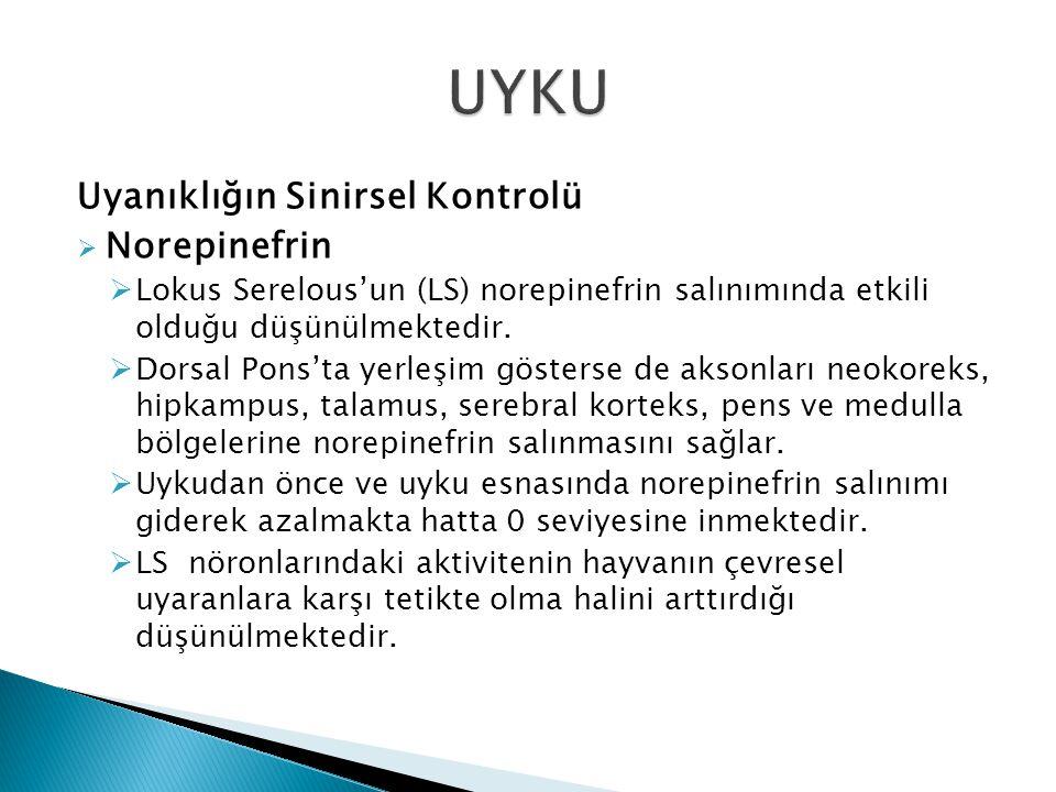 Uyanıklığın Sinirsel Kontrolü  Norepinefrin  Lokus Serelous'un (LS) norepinefrin salınımında etkili olduğu düşünülmektedir.  Dorsal Pons'ta yerleşi