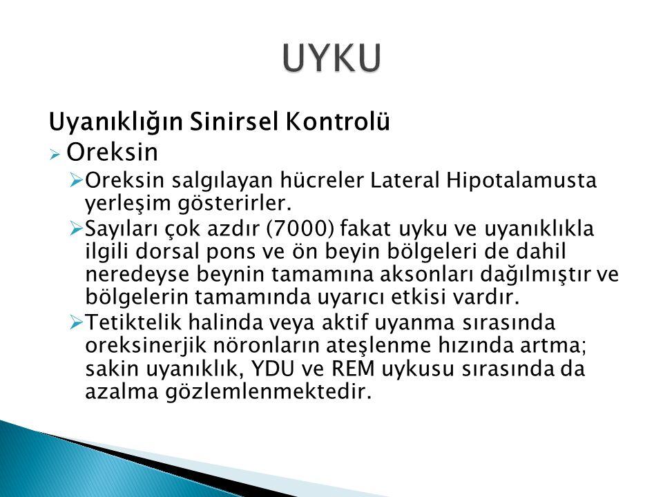 Uyanıklığın Sinirsel Kontrolü  Oreksin  Oreksin salgılayan hücreler Lateral Hipotalamusta yerleşim gösterirler.  Sayıları çok azdır (7000) fakat uy
