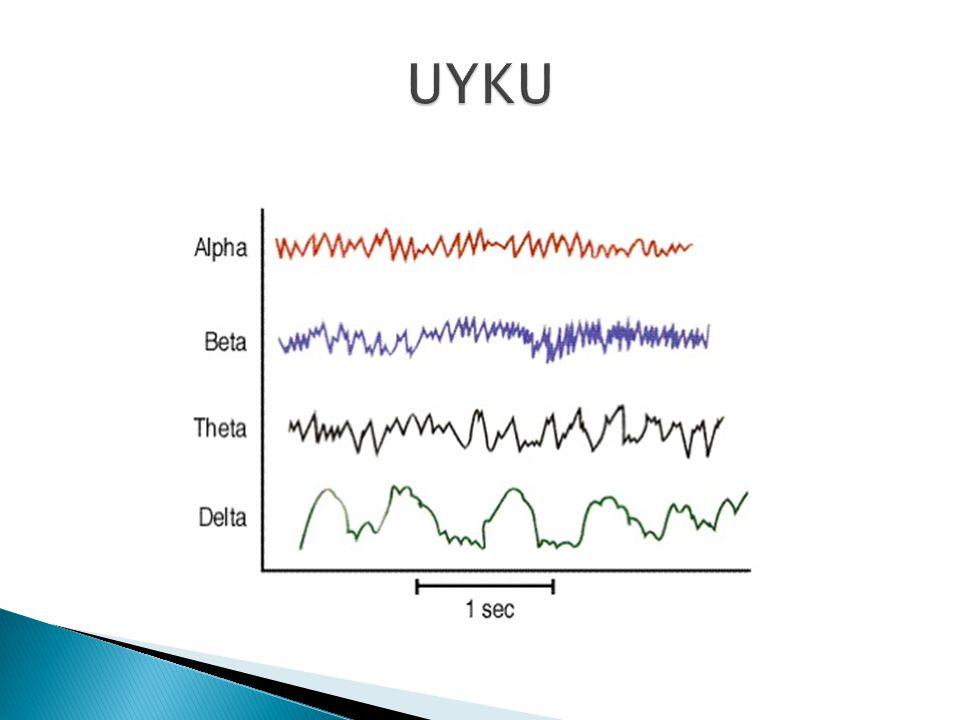 Uyku Sırasındaki EEG Aktiviteleri  Alfa aktivitesi 8 – 12 Hz'lik düzenli orta frekanstır.