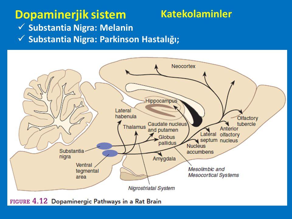 Dopaminerjik sistem Substantia Nigra: Melanin Substantia Nigra: Parkinson Hastalığı; Katekolaminler
