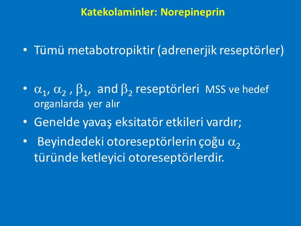 Tümü metabotropiktir (adrenerjik reseptörler)  1,  2,  1, and  2 reseptörleri MSS ve hedef organlarda yer alır Genelde yavaş eksitatör etkileri va