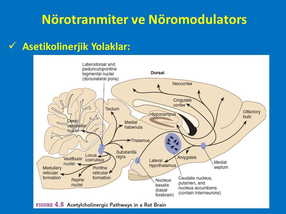 Dopaminerjik sistem Apomorfin: Düşük ve Yüksek doz Düşük doz: presinaptik reseptörleri bloklama; Antagonist Yüksek doz: Possinaptik respetörelri uyarma: Agonist Katekolaminler
