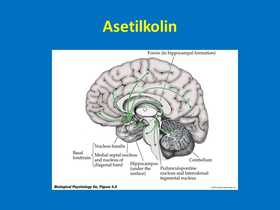 Asetikolin Botulinum toxin (Konservelerdeki bozulmayı yapan bakteri tarafından üretilir): ACh salınımını engeller ve Çift görme, Boğulma Kara dul örümceği zehri: Ach salınımını arttırır: Çarpıntı Miyasteni: sinir-kas bağlantılarındaki ACh reseptörlerine kendi bağışıklık sistemi tarafından saldırı.