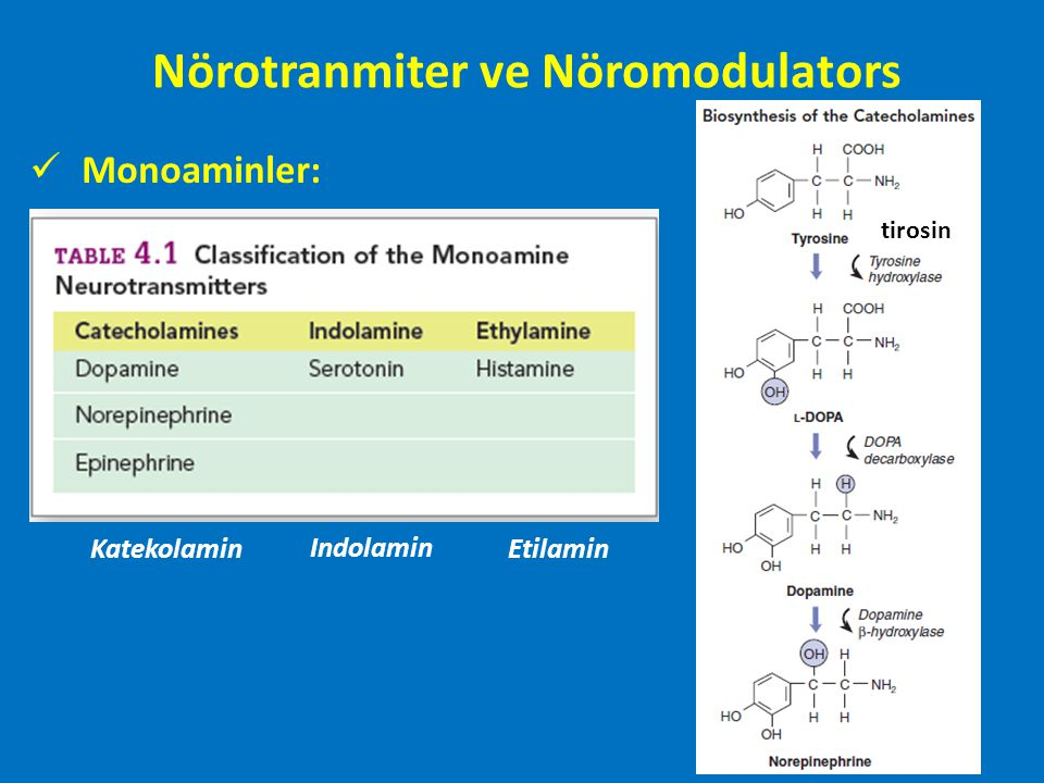 Dopamin ve Dopaminerjik sistem Bağlandığı reseptöregöre hem hızlandırıcı hem de ketleyici olabilir.