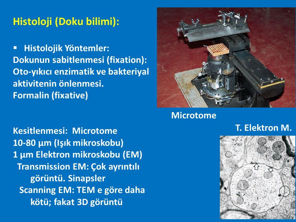 Histoloji (Doku bilimi):  Histolojik Yöntemler: Dokunun sabitlenmesi (fixation): Oto-yıkıcı enzimatik ve bakteriyal aktivitenin önlenmesi. Formalin (