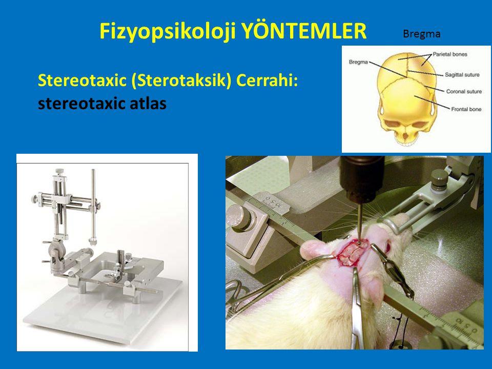 Stereotaxic (Sterotaksik) Cerrahi: stereotaxic atlas Fizyopsikoloji YÖNTEMLER Bregma