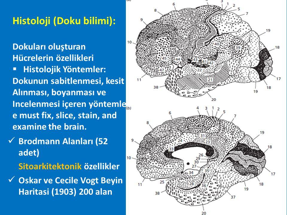 df fMRI noninvasive