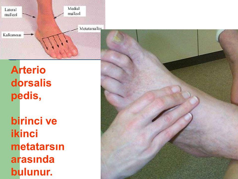 Arterio dorsalis pedis, birinci ve ikinci metatarsın arasında bulunur.