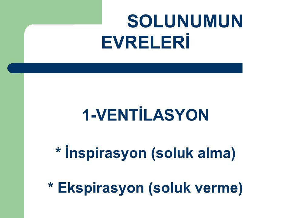 SOLUNUMUN EVRELERİ 1-VENTİLASYON * İnspirasyon (soluk alma) * Ekspirasyon (soluk verme)