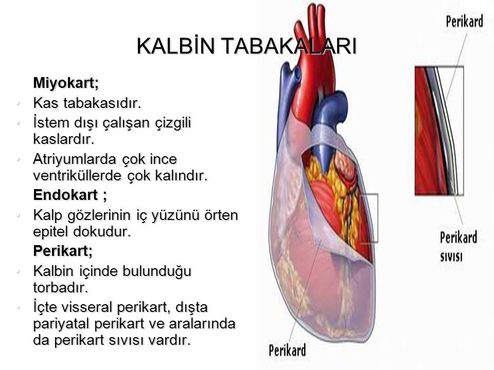 KALBİN ATIM HACMİ (STROKE VOLUME) Her sistolde sağ ve sol ventrikülden bir defada damarlara pompalanan kan miktarıdır.