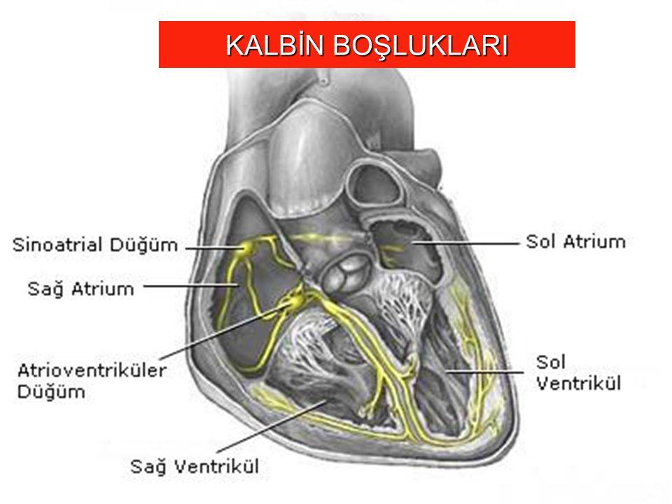 VENTRİKÜLER SEPTAL DEFEKT (VSD) Defekt sol ventrikülden sağ ventriküle doğru bir şanta yol açar Sol ventrikülden kan septal defekt aracılığı ile doğrudan doğruya sağ atriyuma geçebilir.