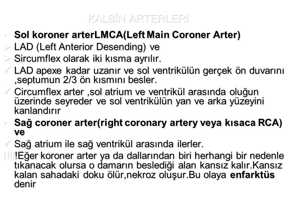 KALBİN ARTERLERİ Sol koroner arterLMCA(Left Main Coroner Arter)Sol koroner arterLMCA(Left Main Coroner Arter)  LAD (Left Anterior Desending) ve  Sir