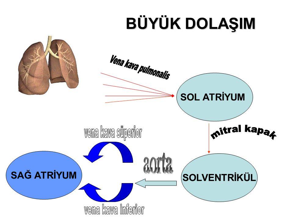 PULMONER STENOZ Tanım; Pulmoner stenoz, konjenital olarak pulmoner kapakçıkların darlıklarıdır.