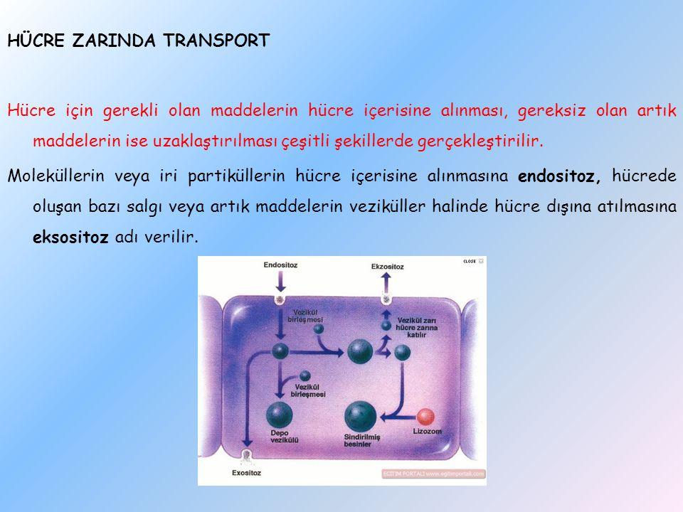 HÜCRE ZARINDA TRANSPORT Hücre için gerekli olan maddelerin hücre içerisine alınması, gereksiz olan artık maddelerin ise uzaklaştırılması çeşitli şekil