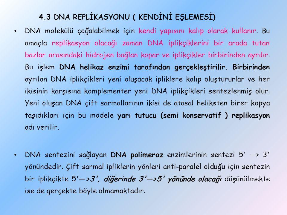 4.3 DNA REPLİKASYONU ( KENDİNİ EŞLEMESİ) DNA molekülü çoğalabilmek için kendi yapısını kalıp olarak kullanır. Bu amaçla replikasyon olacağı zaman DNA