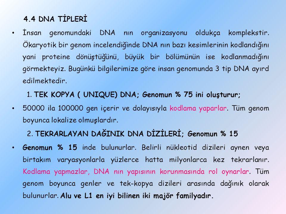 4.4 DNA TİPLERİ İnsan genomundaki DNA nın organizasyonu oldukça komplekstir. Ökaryotik bir genom incelendiğinde DNA nın bazı kesimlerinin kodlandığını