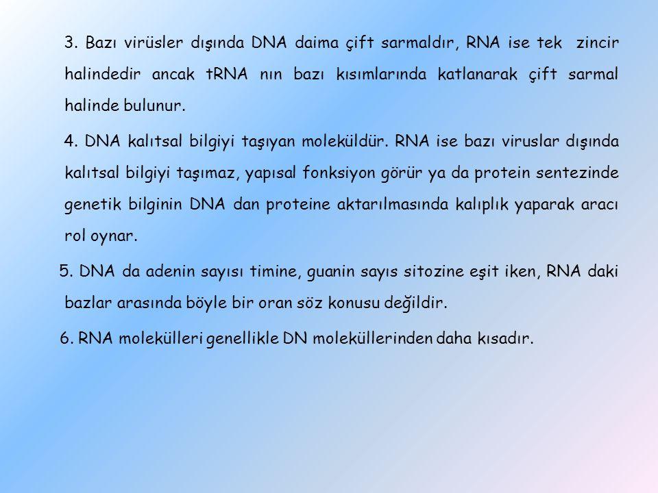 3. Bazı virüsler dışında DNA daima çift sarmaldır, RNA ise tek zincir halindedir ancak tRNA nın bazı kısımlarında katlanarak çift sarmal halinde bulun