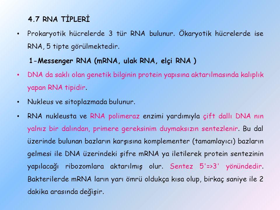 4.7 RNA TİPLERİ Prokaryotik hücrelerde 3 tür RNA bulunur. Ökaryotik hücrelerde ise RNA, 5 tipte görülmektedir. 1-Messenger RNA (mRNA, ulak RNA, elçi R