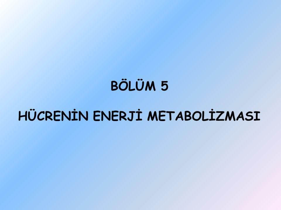 BÖLÜM 5 HÜCRENİN ENERJİ METABOLİZMASI