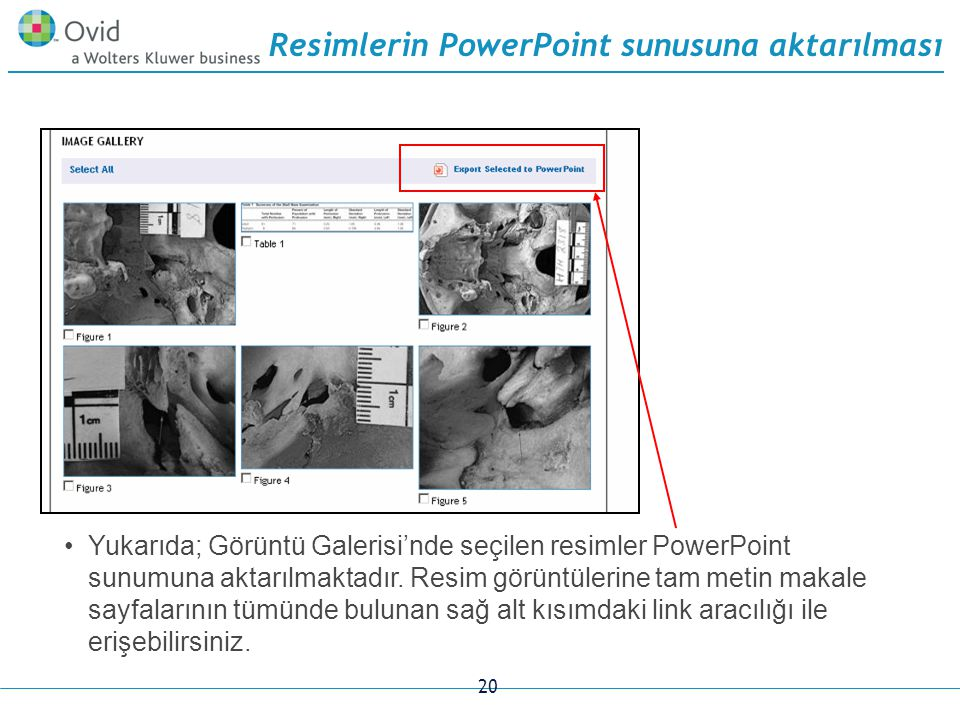 20 Resimlerin PowerPoint sunusuna aktarılması Yukarıda; Görüntü Galerisi'nde seçilen resimler PowerPoint sunumuna aktarılmaktadır.
