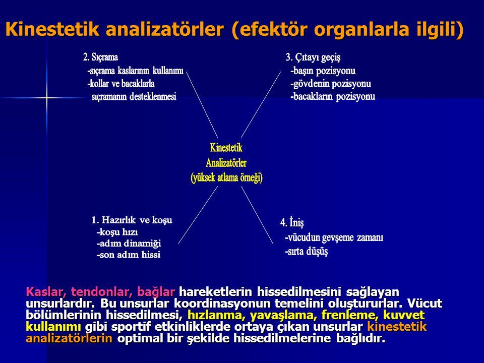 Kinestetik analizatörler (efektör organlarla ilgili) Kaslar, tendonlar, bağlar hareketlerin hissedilmesini sağlayan unsurlardır. Bu unsurlar koordinas