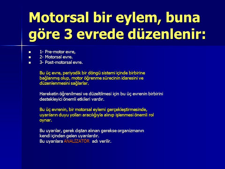 Motorsal bir eylem, buna göre 3 evrede düzenlenir: 1- Pre-motor evre, 2- Motorsal evre. 3- Post-motorsal evre. Bu üç evre, periyodik bir döngü sistemi