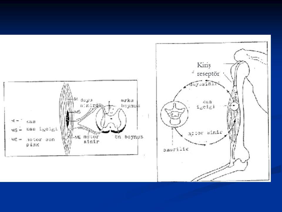 Kiriş reseptör