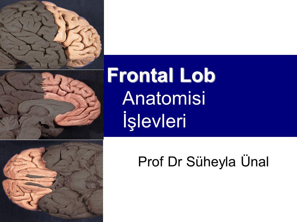 Functional Frontal Lobe Anatomy Motor cortex  Primary  Premotor  Supplementary  Frontal eye field  Broca's speech area Prefrontal cortex  Dorsolateral  Medial  Orbitofrontal