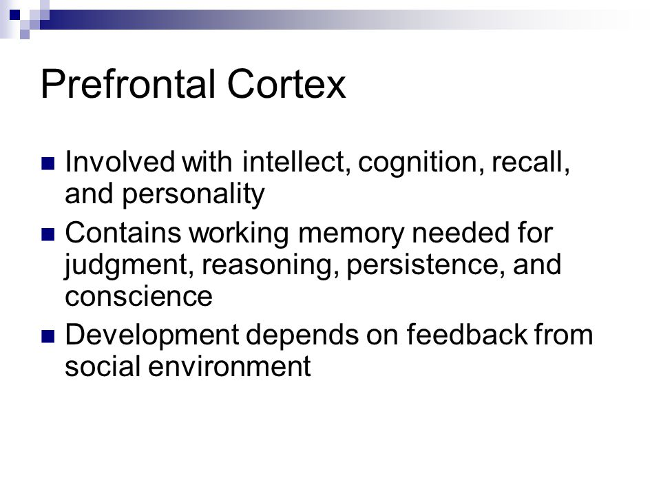 Prefrontal Cortex Involved with intellect, cognition, recall, and personality Contains working memory needed for judgment, reasoning, persistence, and conscience Development depends on feedback from social environment