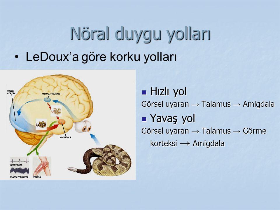 Nöral duygu yolları Hızlı yol Hızlı yol Görsel uyaran → Talamus → Amigdala Yavaş yol Yavaş yol Görsel uyaran → Talamus → Görme korteksi → Amigdala LeD