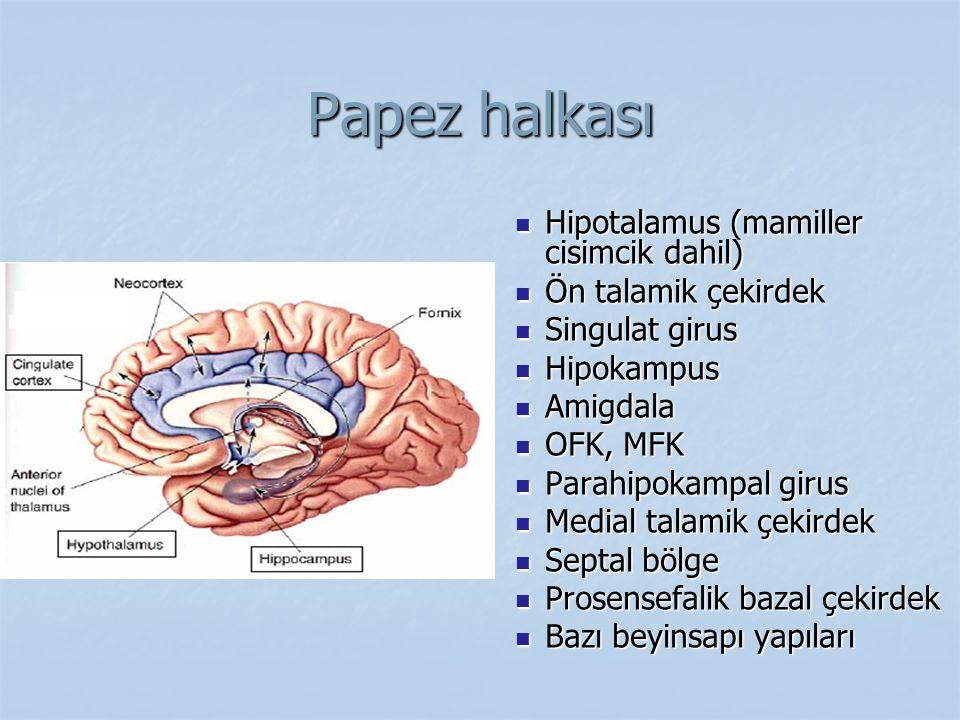 Papez halkası Hipotalamus (mamiller cisimcik dahil) Ön talamik çekirdek Singulat girus Hipokampus Amigdala OFK, MFK Parahipokampal girus Medial talami