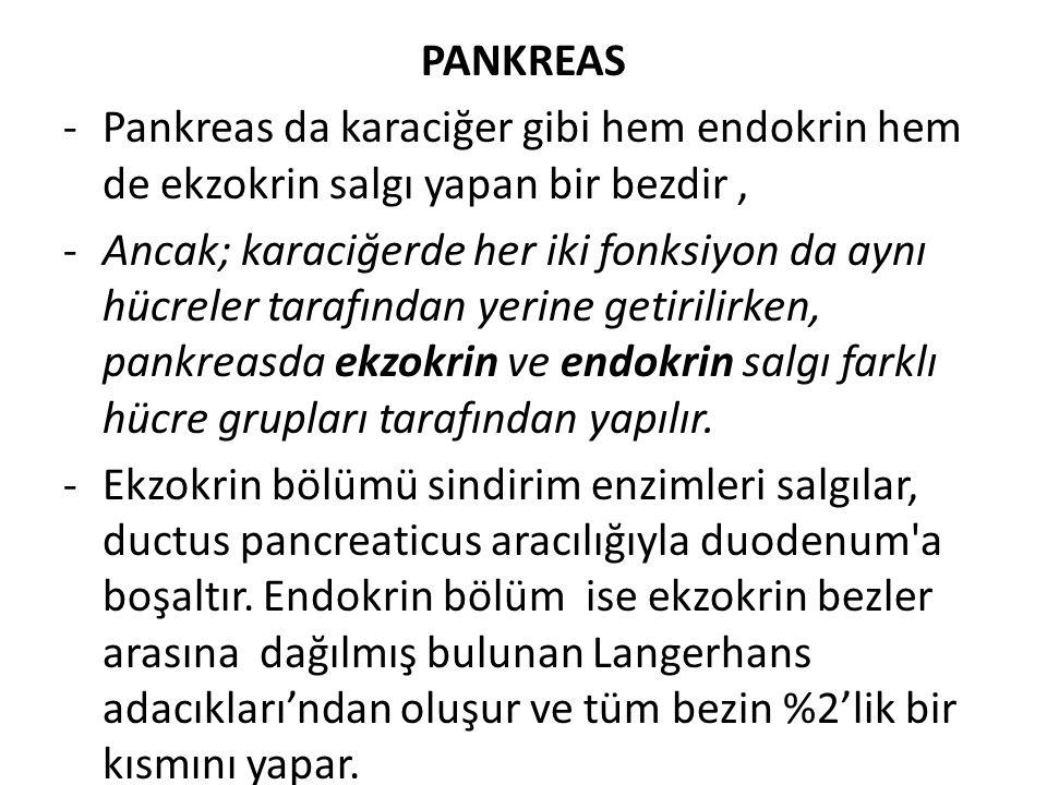 PANKREAS -Pankreas da karaciğer gibi hem endokrin hem de ekzokrin salgı yapan bir bezdir, -Ancak; karaciğerde her iki fonksiyon da aynı hücreler taraf