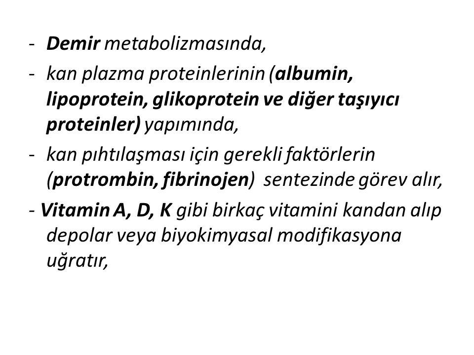 -Demir metabolizmasında, -kan plazma proteinlerinin (albumin, lipoprotein, glikoprotein ve diğer taşıyıcı proteinler) yapımında, -kan pıhtılaşması içi