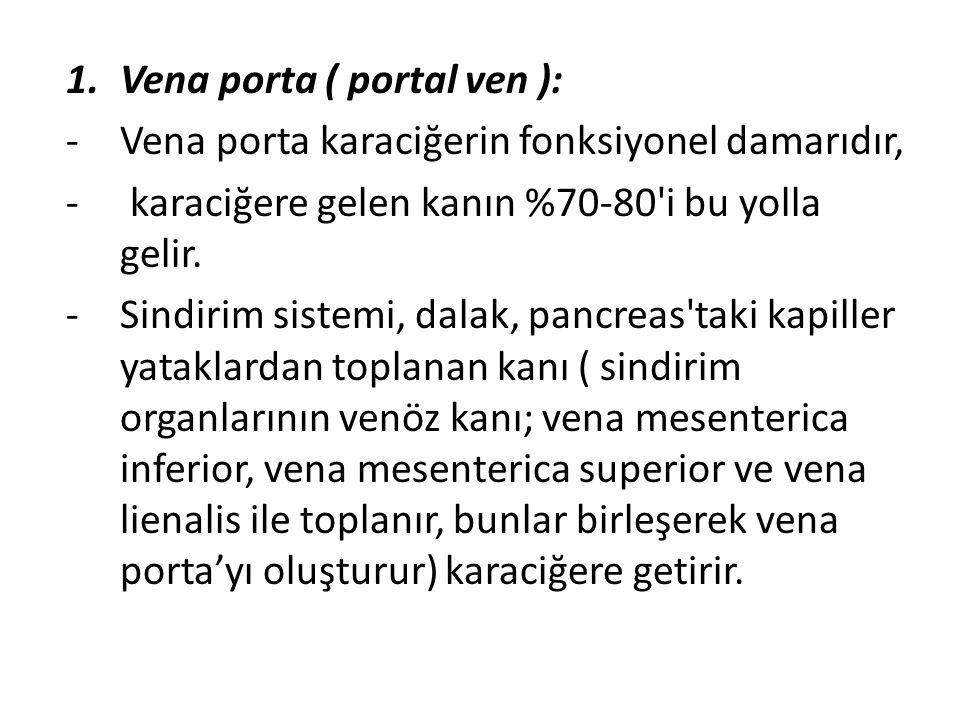 1.Vena porta ( portal ven ): -Vena porta karaciğerin fonksiyonel damarıdır, - karaciğere gelen kanın %70-80'i bu yolla gelir. -Sindirim sistemi, dalak