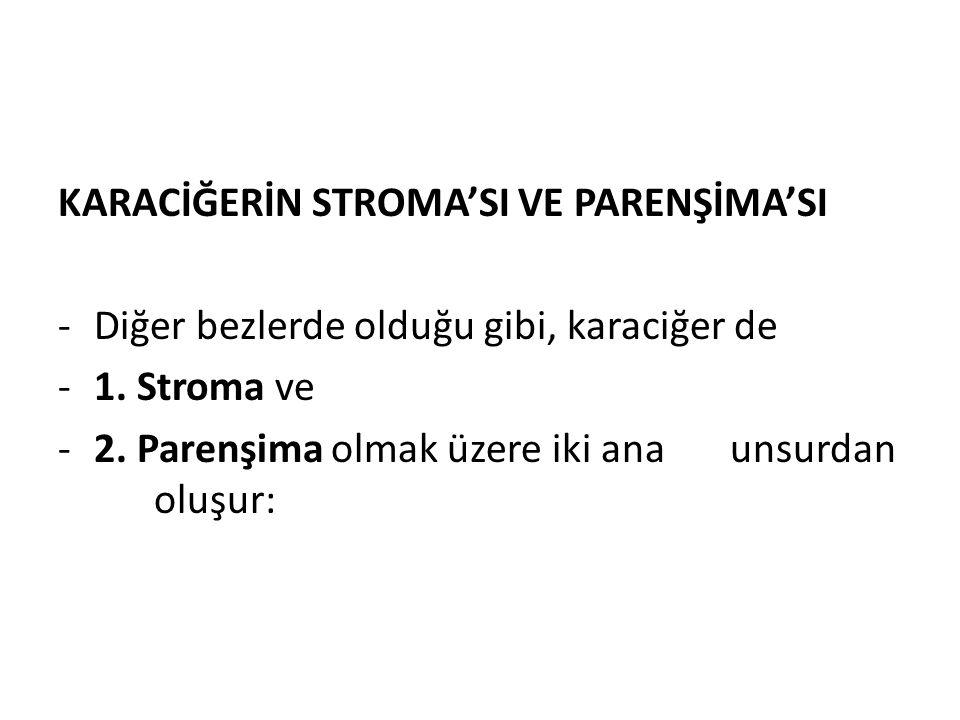 KARACİĞERİN STROMA'SI VE PARENŞİMA'SI -Diğer bezlerde olduğu gibi, karaciğer de -1. Stroma ve -2. Parenşima olmak üzere iki anaunsurdan oluşur: