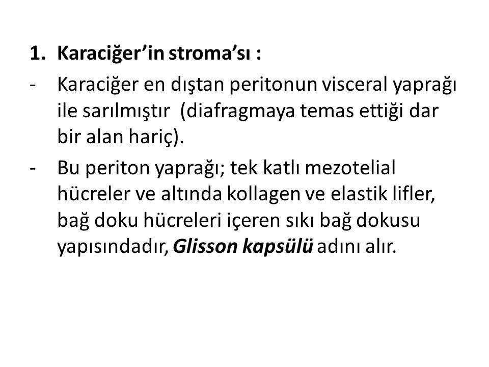 1.Karaciğer'in stroma'sı : -Karaciğer en dıştan peritonun visceral yaprağı ile sarılmıştır (diafragmaya temas ettiği dar bir alan hariç). -Bu periton