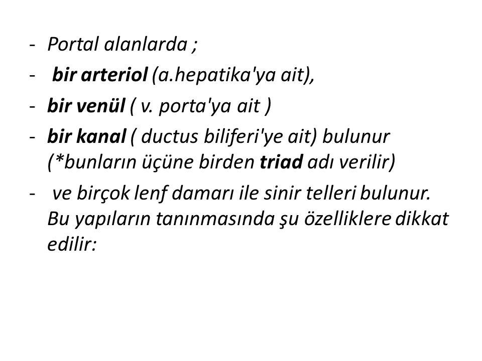 -Portal alanlarda ; - bir arteriol (a.hepatika'ya ait), -bir venül ( v. porta'ya ait ) -bir kanal ( ductus biliferi'ye ait) bulunur (*bunların üçüne b