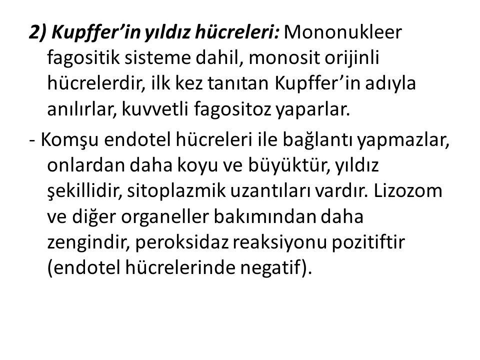 2) Kupffer'in yıldız hücreleri: Mononukleer fagositik sisteme dahil, monosit orijinli hücrelerdir, ilk kez tanıtan Kupffer'in adıyla anılırlar, kuvvet