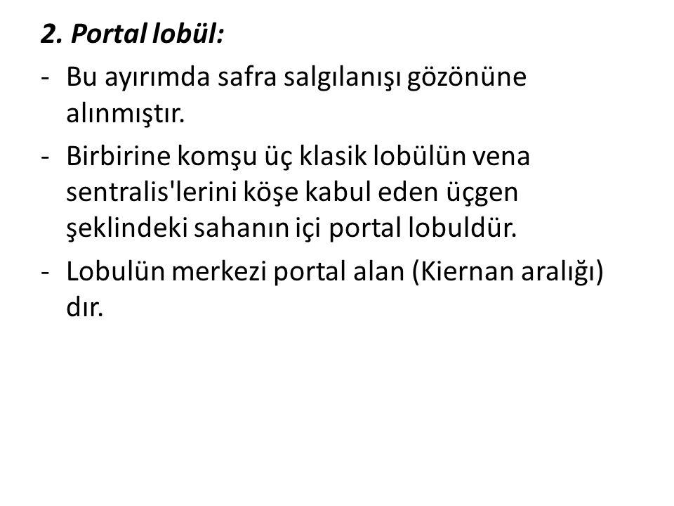 2. Portal lobül: -Bu ayırımda safra salgılanışı gözönüne alınmıştır. -Birbirine komşu üç klasik lobülün vena sentralis'lerini köşe kabul eden üçgen şe