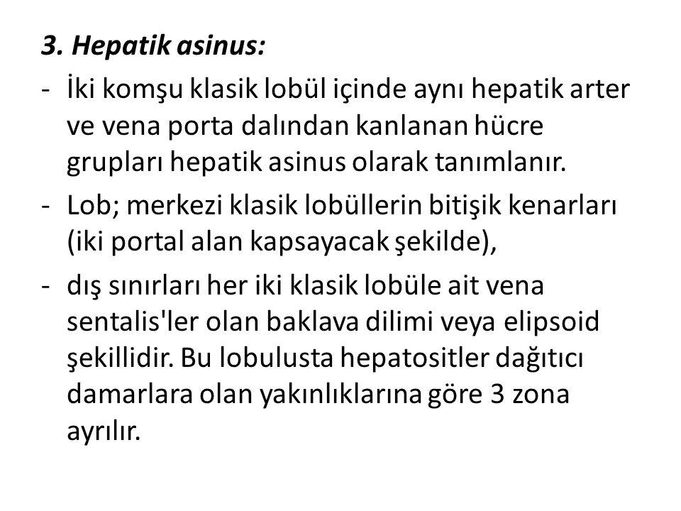 3. Hepatik asinus: -İki komşu klasik lobül içinde aynı hepatik arter ve vena porta dalından kanlanan hücre grupları hepatik asinus olarak tanımlanır.