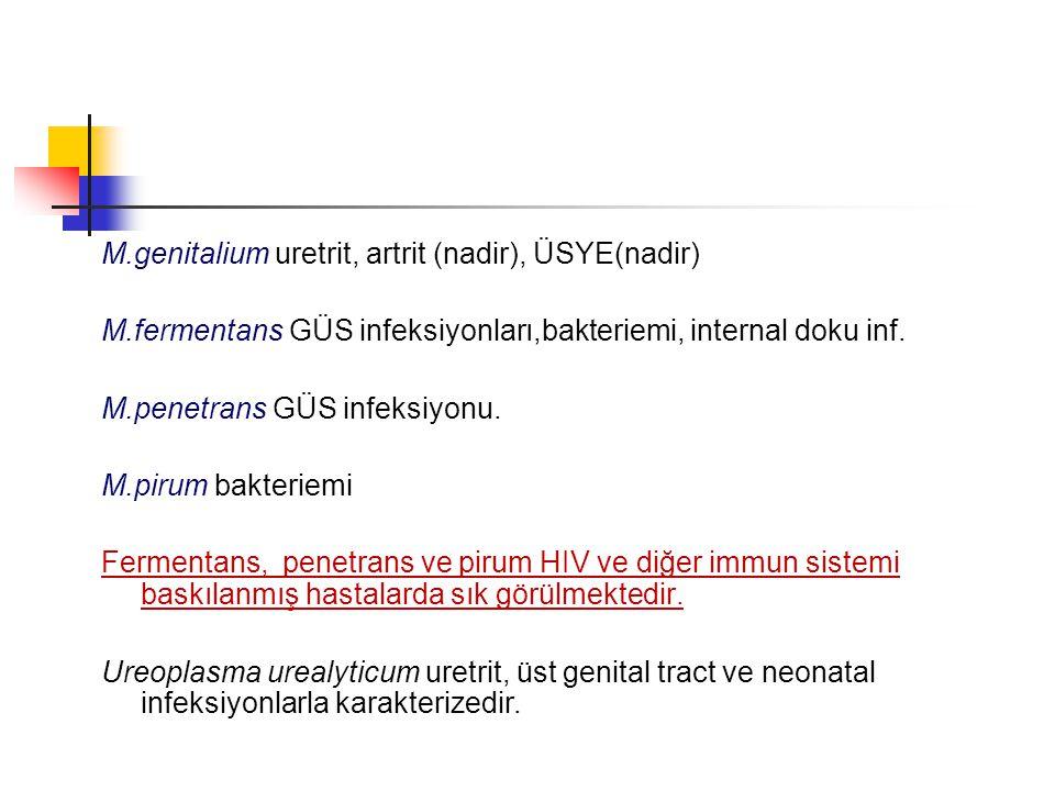 M.genitalium uretrit, artrit (nadir), ÜSYE(nadir) M.fermentans GÜS infeksiyonları,bakteriemi, internal doku inf. M.penetrans GÜS infeksiyonu. M.pirum